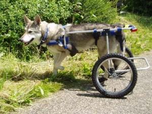 SWH in rolstoel