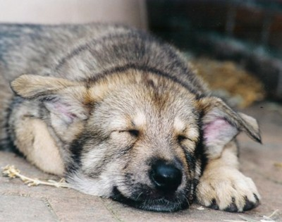 een pup kopen 5